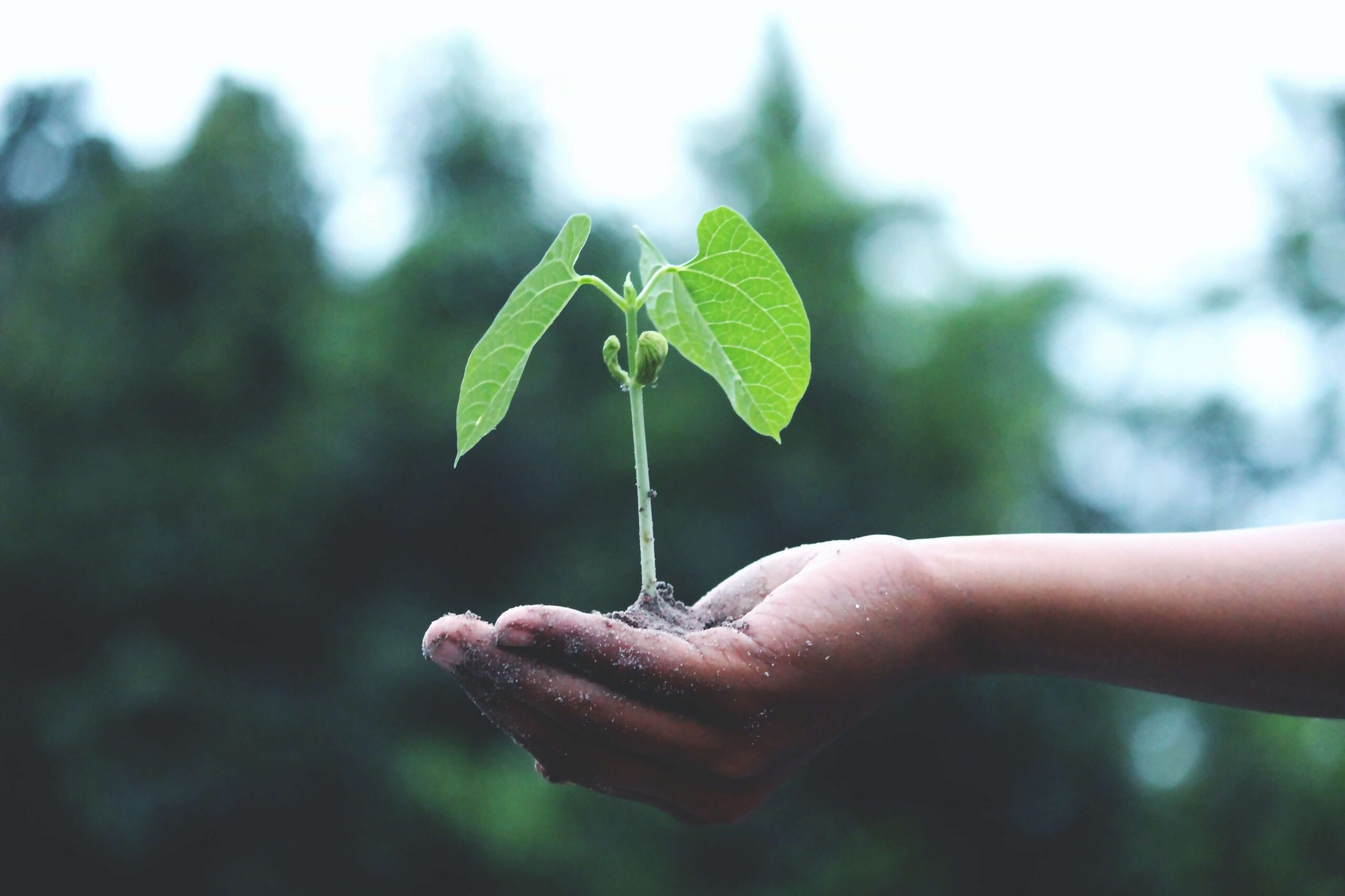 Qual è l'impatto dell'agricoltura sull'ambiente?